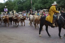 The cattle drive has started